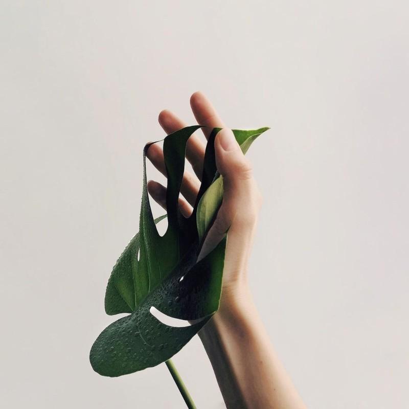 Οικολογική εφεύρεση απομακρύνει τους ρύπους από τον αέρα του σπιτιού χρησιμοποιώντας φυτά εσωτερικού χώρου
