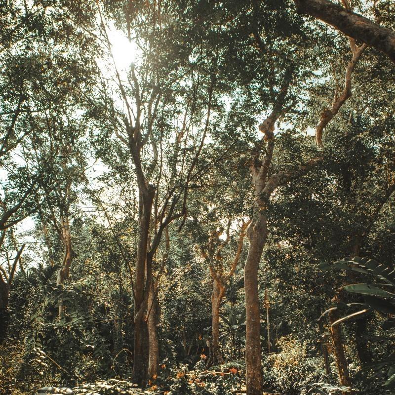 Κλιματική αλλαγή: Η υπερθέρμανση του πλανήτη θέτει σε κίνδυνο τη ζωή των κατοίκων των τροπικών περιοχών