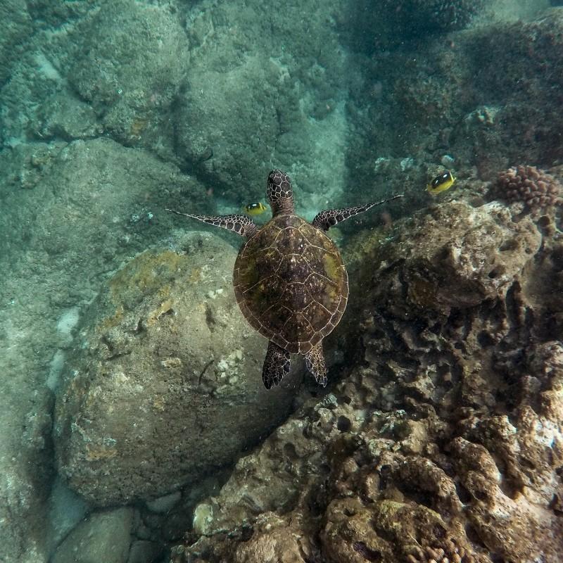 Ακτιβιστές απελευθέρωσαν 36 απειλούμενες χελώνες στα Γκαλαπάγκος