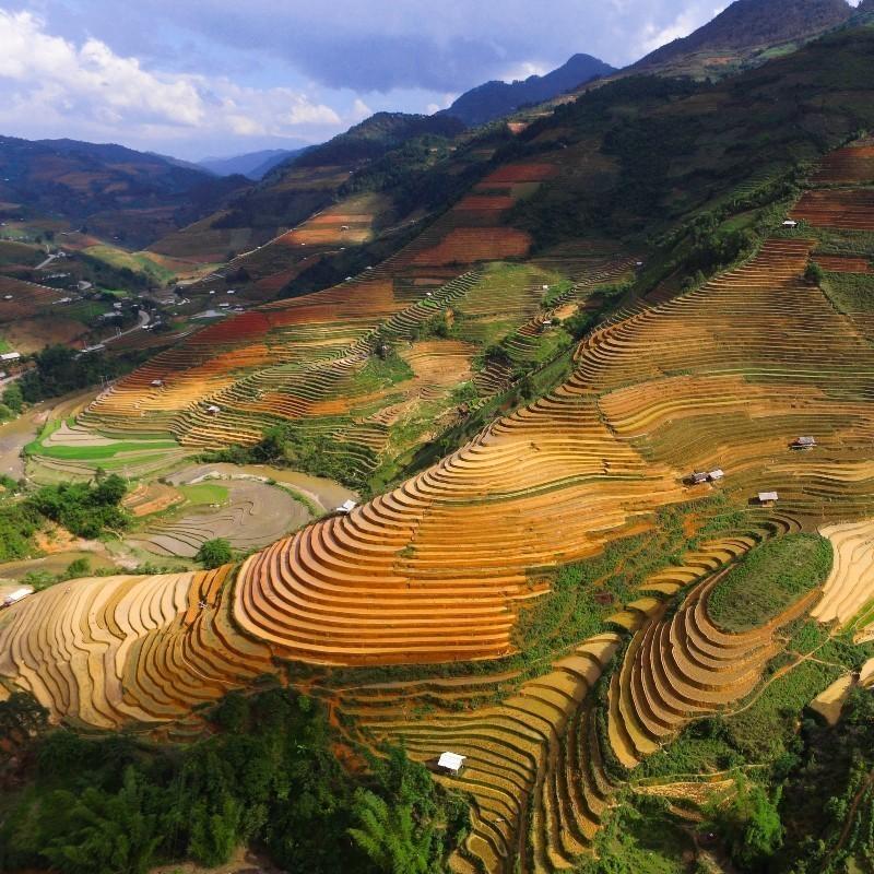 Μεγάλη νίκη για το περιβάλλον: 3 σημαντικές επιχειρήσεις τροφίμων στρέφονται στην «πράσινη» γεωργία