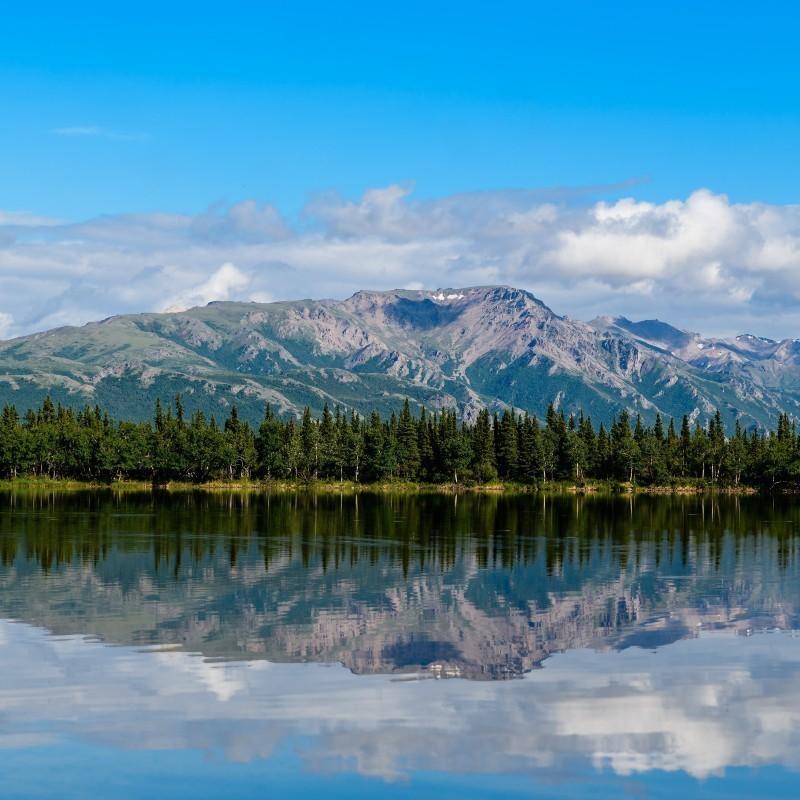 Κλιματική αλλαγή: Ο λόγος που τα δάση της Αλάσκας είναι πιο ανθεκτικά απ' όσο θα περιμέναμε